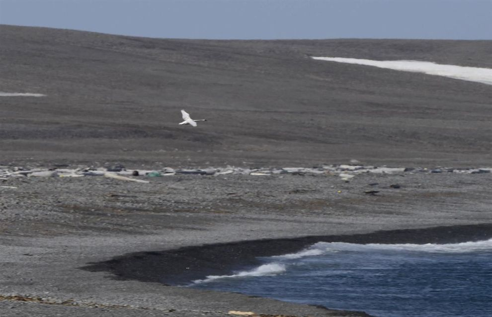 Several new bird species found in Russian Arctic National Park
