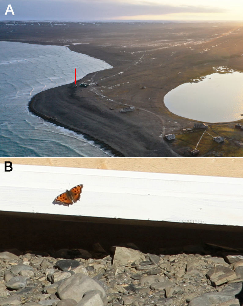 Место обнаружения бабочки и бабочка