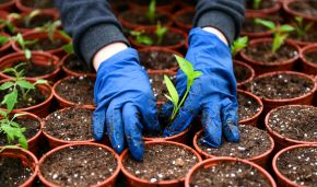 Yakutia ends 40-year seed-storage experiment