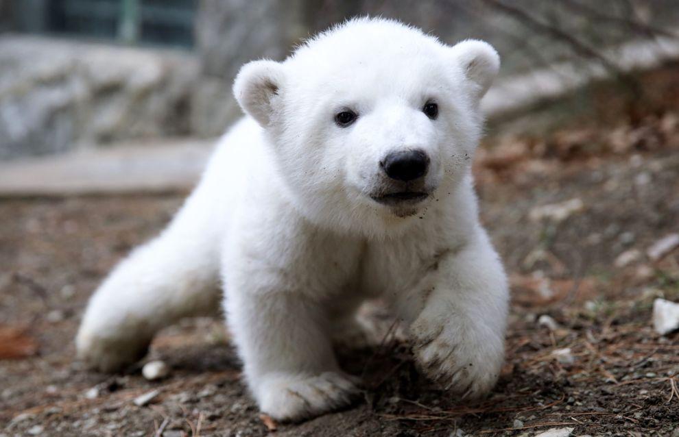 Росприроднадзор: стратегия сохранения белого медведя в России будет принята до конца года