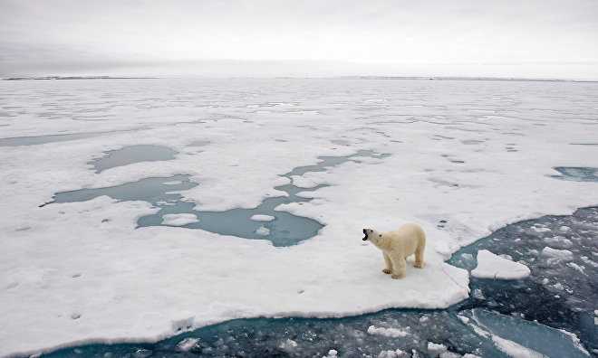 Scientists to track polar bears on Vaygach Island and Novaya Zemlya Archipelago