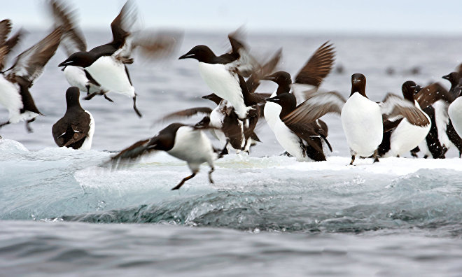 Wild animals and birds count completed in Yamal