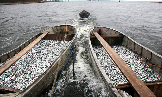 Russia, Iceland discuss fishery cooperation