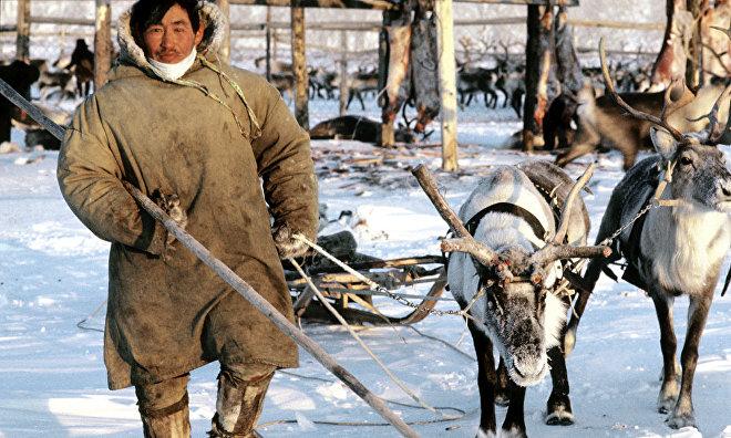 Camp of reindeer herders