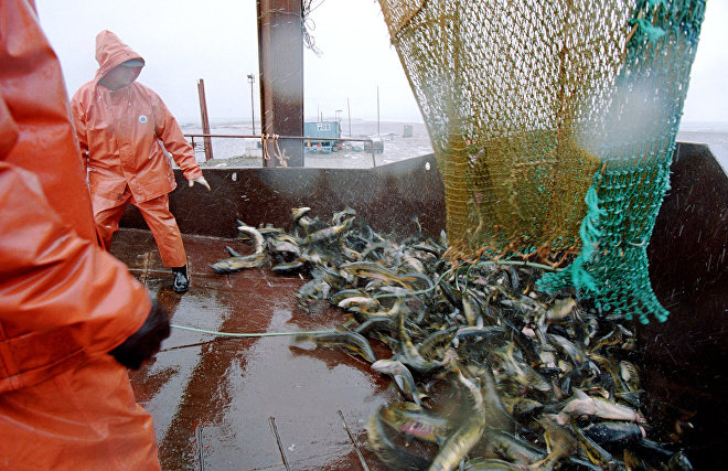 Murmansk to host an international conference on Arctic fishing