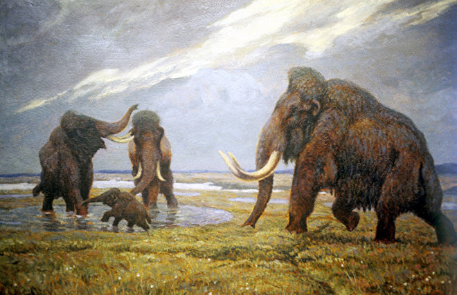 Репродукция диорамы Мамонты гуляют. Зоологический музей, Санкт-Петербург
