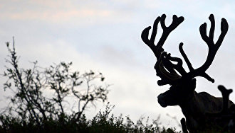 Timur Akchurin: Reindeer breeding is a factor of Arctic development