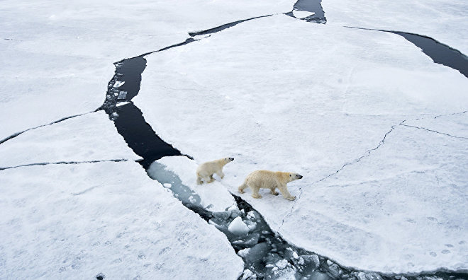 Expedition to Bely Island to count polar bears