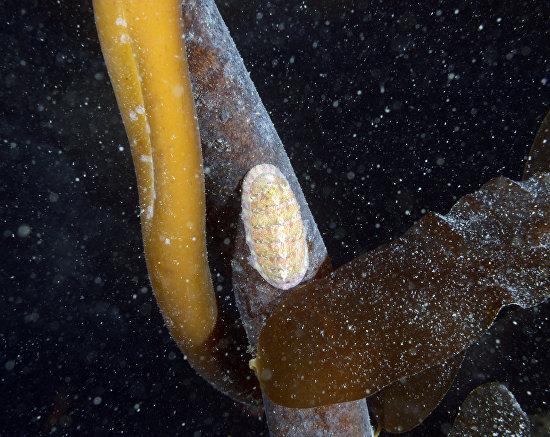 Underwater world of the Arctic