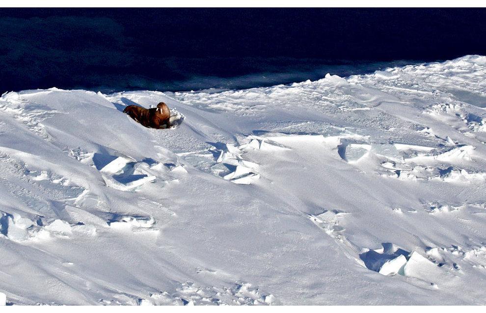 Экспедиция «АвиаКара-2015»