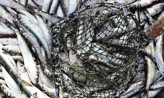 Russian Federal Fisheries Agency to analyze profit potential for Arctic fishing