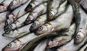 Industrial capelin catching in Barents Sea to be banned in 2016