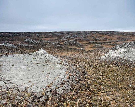 Wildlife on the New Siberian Islands