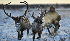 Murmansk Region to offer Arctic cuisine tours
