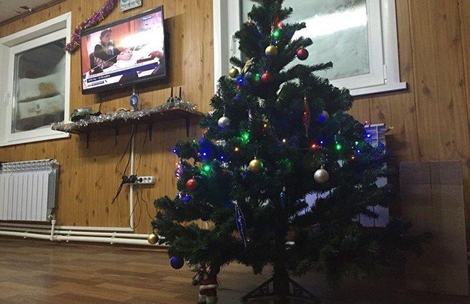 New Year tree on Alexandra Land