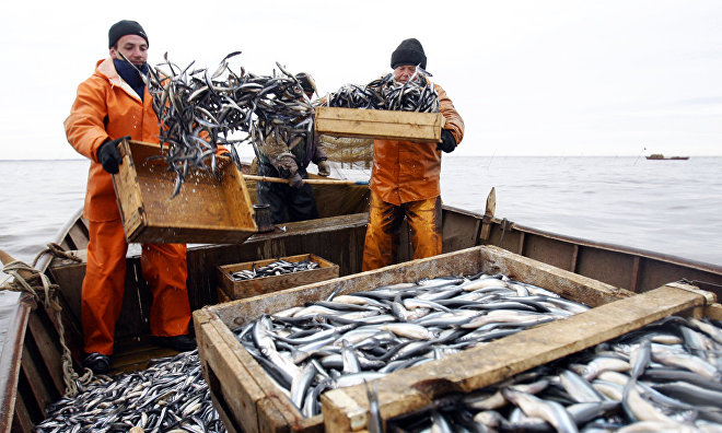 Nenets Autonomous Area catches 14,000 tons of fish in 2015