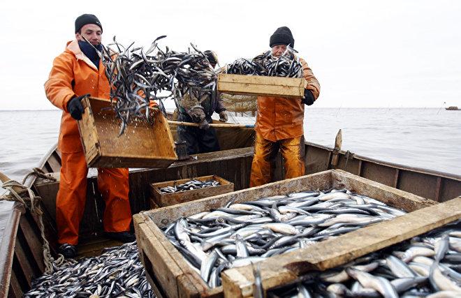 Норвегия ратифицировала новое соглашение о рыболовстве в Арктике