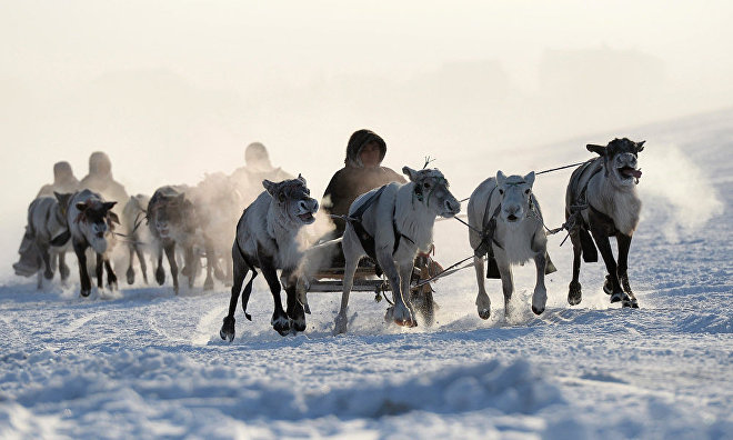 Reindeer-breeders and hunters to gather for 55th conference