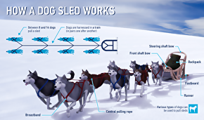 How a dog sled works