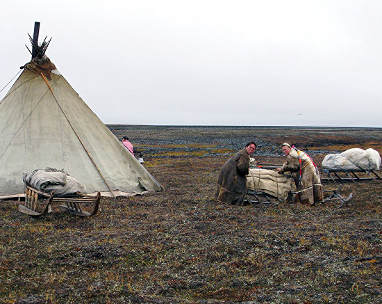 A camp of Nenets reindeer breeders on Yamal Peninsula