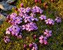 Новоземельская флора