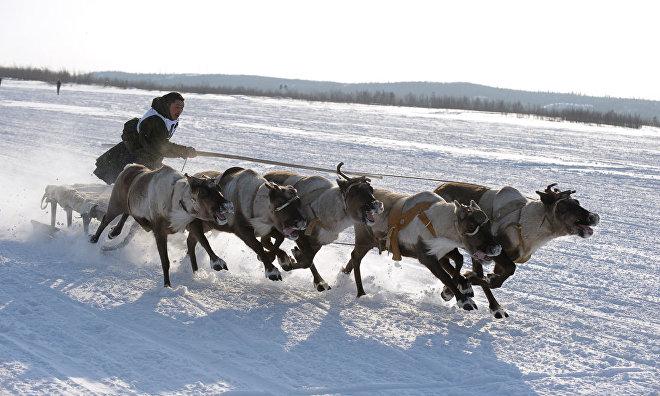 Chukotka to host Erak-Or 2016 annual reindeer sled race