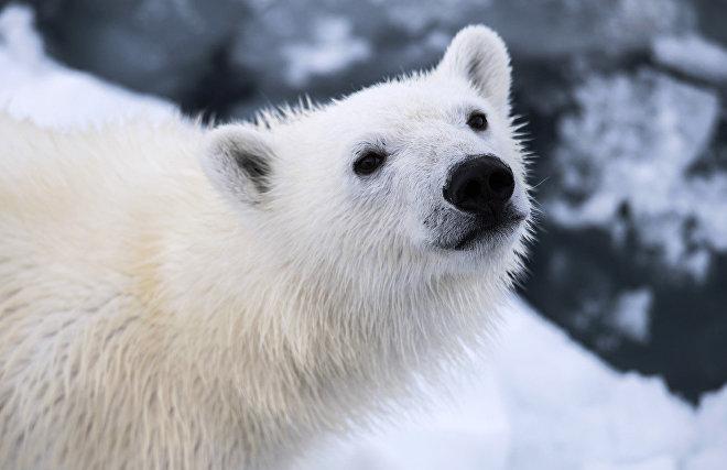 Medvezhyi Islands: A new Arctic nature reserve