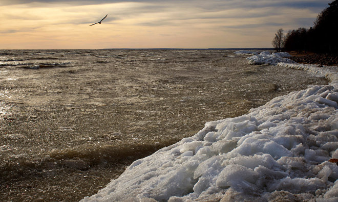 Russia to send an environmental expedition to Hogland