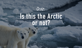 Is this the Arctic or not?