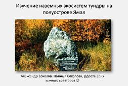 Изучение наземных экосистем тундры на полуострове Ямал