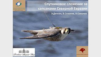 Изучение наземных экосистем тундры на полуострове Ямал. Спутниковое слежение за сапсанами Северной Евразии