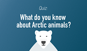 What do you know about Arctic animals?