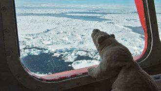 Путин обязал иностранные туристические суда сообщать о маршрутах в Российской Арктике