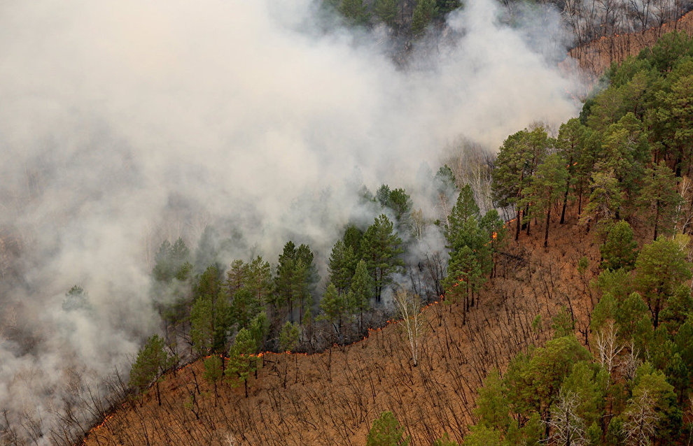 Over 10,000 hectares have burned in Yamal this summer