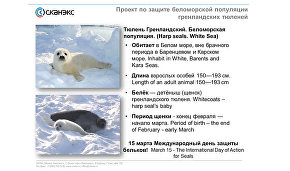 """Webinar """"Using satellite technology for the study and protection of Arctic mammals"""""""