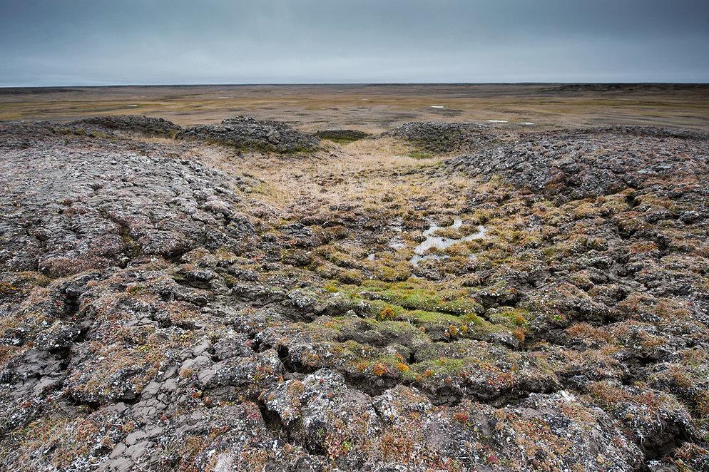 Стадо оленей на просторах архипелага Новосибирские острова