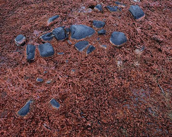 Red algae near Leigh-Smith Island