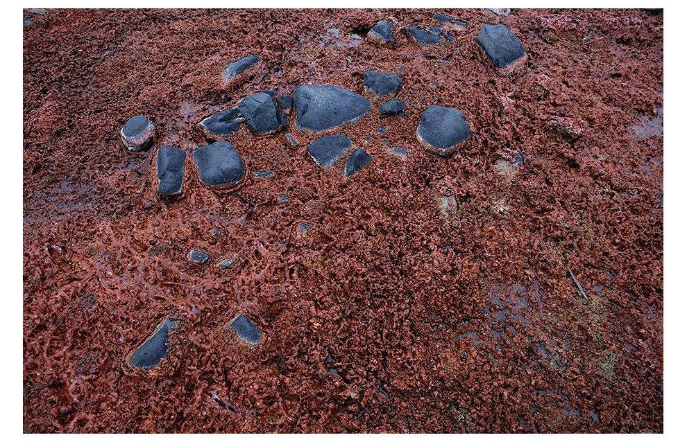 Красные водоросли в водоемах острова Ли-Смита