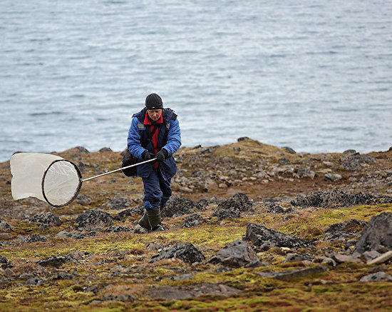 Entomologist Andrei Krasheninnikov on Cape Norway, Jackson Island