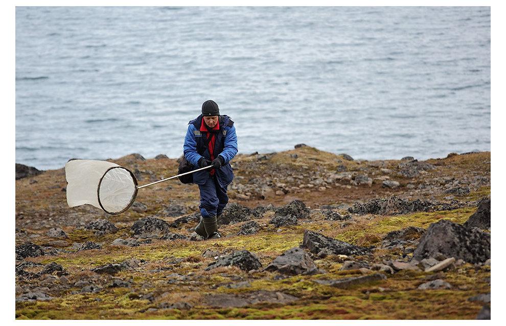 Энтомолог Андрей Крашенинников на мысе Норвегия, остров Джексона