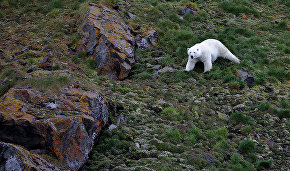 Planes, drones to help count polar bear population