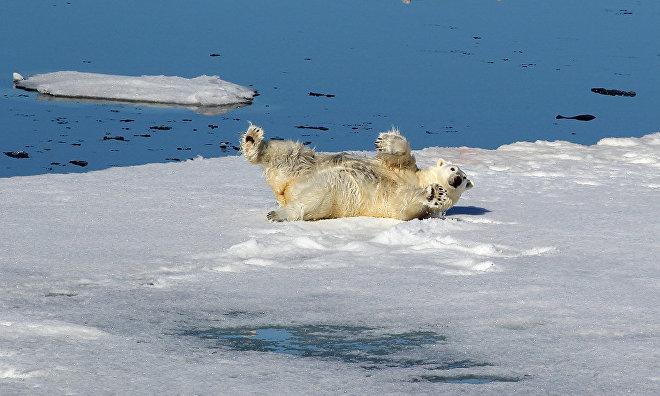 Арктика, все включено: лед, шторм, медведи