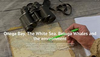 Onega Bay. The White Sea. Beluga Whales and the environment