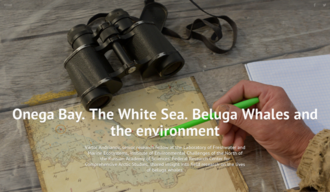Onega Bay. The White Sea. Beluga Whales and the environment