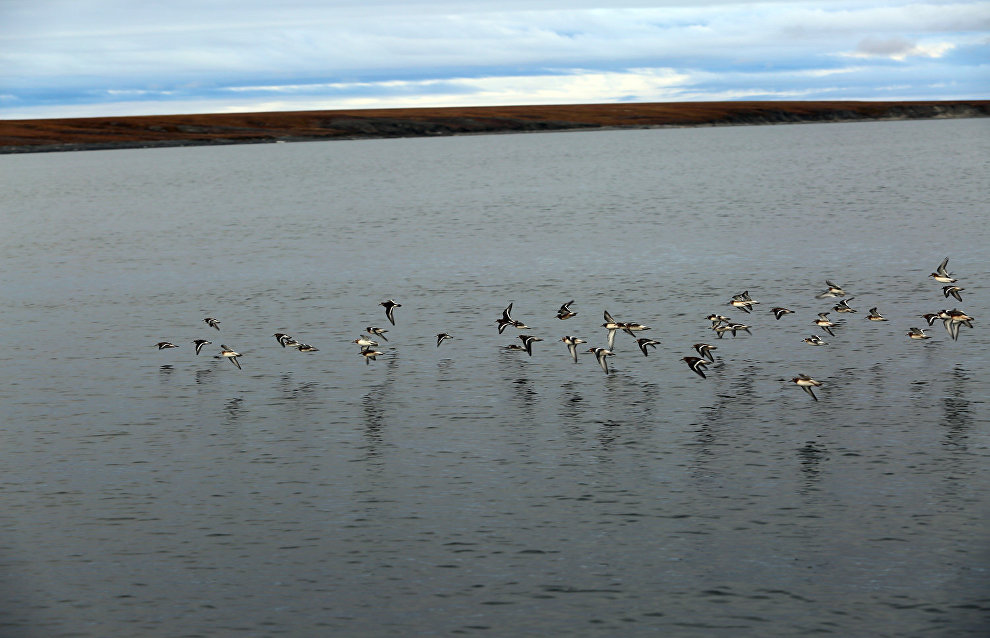 Great Arctic State Nature Reserve