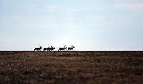 Большой Арктический государственный природный заповедник