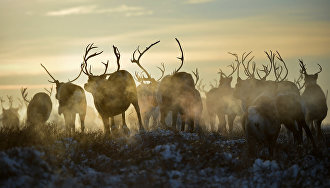 Nenets Governor: Extreme North travel demand exceeds supply