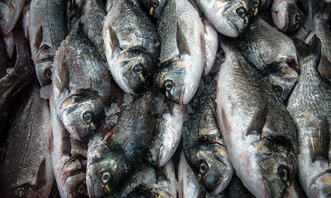 Over 9 tons of fish produced in Yamal-Nenets Autonomous Area in 2016