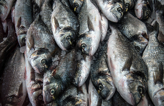 """The Federal Agency for Fishery, Rosatom State Corporation and fishing companies will establish a working group whose members are to set up a shipping line for fish deliveries from the Far East to the European part of Russia via the Northern Sea Route, according to the agency's press service. The agreement was reached October 24 at a meeting of representatives of Rosatom's Northern Sea Route directorate, the Federal Agency for Fishery, fishing companies and associations, executive agencies, and regional administrations. """"It is necessary to develop alternative routes for delivering fish products from the Far East, and this will help boost the Russian Federation's food security. Alternative options include establishing a permanent shipping line for delivering fish products from Russia's Far East via the Northern Sea Route,"""" Deputy Head of the Federal Agency for Fishery Pyotr Savchuk said. According to the agency's press service, Far Eastern fish are already being delivered via the Northern Sea Route, including two consignments this year.  The nuclear-powered icebreaking LASH carrier and container ship Sevmorput can carry up to 1,300 containers and plow through 1.5-meter-thick ice. If our colleagues support us, it will be possible to organize several pre-scheduled trips during the 2019 navigation season,"""" Vyacheslav Ruksha noted. A comprehensive approach is needed to implement the project, including freight for home-bound cargo ships, efforts to upgrade seaport terminals, and new refrigerator and container sites in Russia's Far East and also in Central Russia. """"At the present stage, it would be appropriate to stockpile and deliver fish consignments via the Northern Sea Route via the Petropavlovsk-Kamchatsky seaport,"""" the press service said in a statement. Expanding Northern Sea Route traffic will help establish centres servicing fishing vessels at seaports in Arkhangelsk, Murmansk, Vladivostok, Petropavlovsk-Kamchatsky, and Severo-Kurilsk, and to improve their performan"""