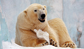 Polar bear cub born at Yakutia zoo